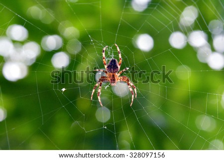 spider and web  - stock photo