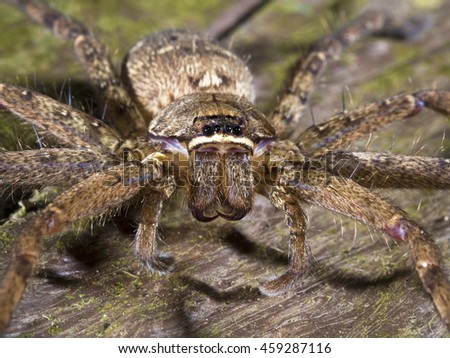 spider at night, Lycosidae