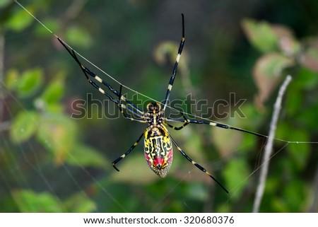 Spider close up - stock photo