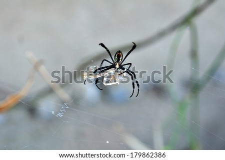 Spider eat dragonfly - stock photo