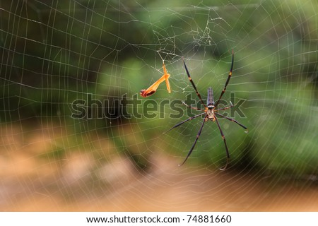 Spider in his web in close-up - stock photo