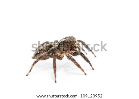 Spider isolated over white