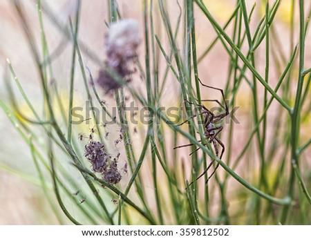 Spider nest - stock photo