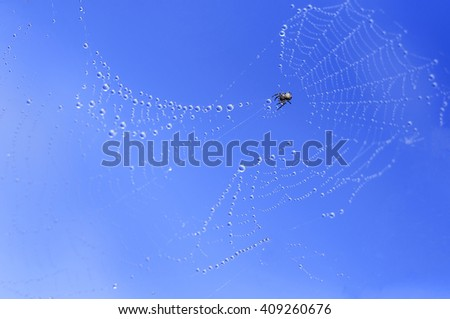 Spider on a web against the blue sky.Cobweb with dew drops on a blue background - stock photo
