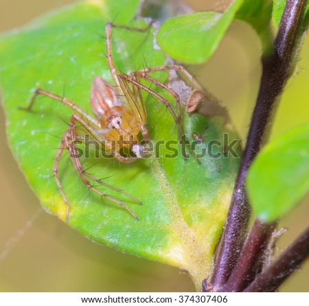 Spider on leaf in the garden.
