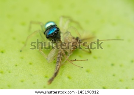 Spider on meal