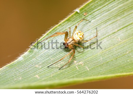 spider on plant in the wild