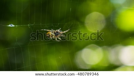 spider on the web closeup