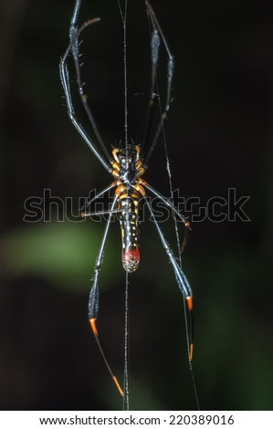 Spider on web - stock photo