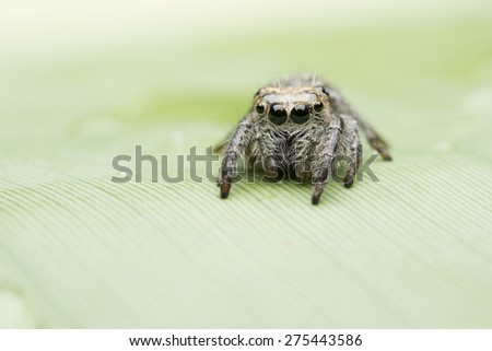Spider. Photo was taken at a wildlife sanctuary in Thailand. - stock photo