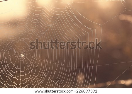 spider's web with dew drops background - stock photo
