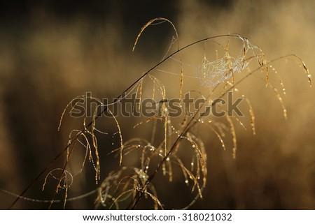 Spider web  - stock photo