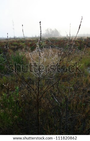 spider web and dew - stock photo