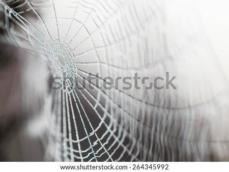 Spider web covered in water droplets -selective blur - stock photo
