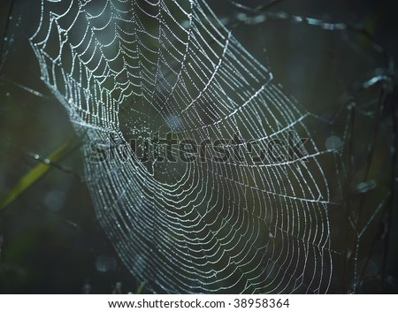 spider web wet with dew - stock photo
