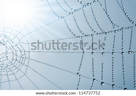 spider web with dew drops closeup - stock photo