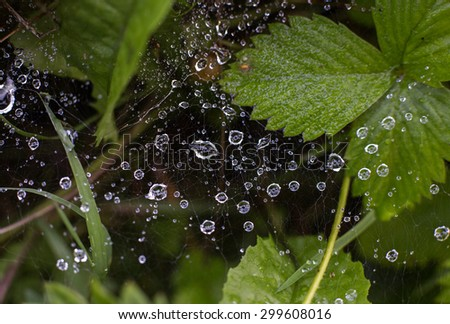 spider web with droplets close-up - stock photo