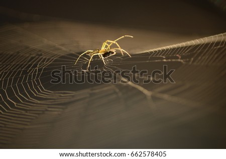 spider with pray on spider web in light