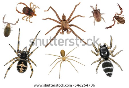 Spiders, mites and ticks. Close up. Isolated on a white background