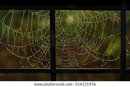 spiderweb in drops of dew in a metallic frame