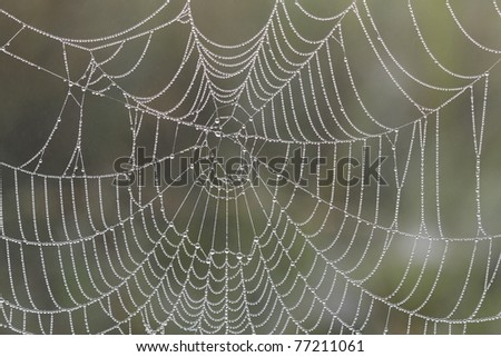 Spiderweb in early morning with dewdrops. - stock photo