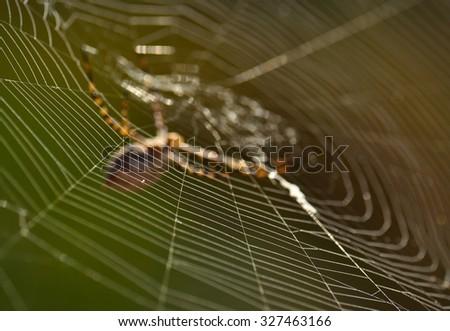 Spiderweb of argiope argentata - stock photo
