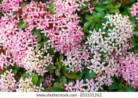 Spike flower. - stock photo