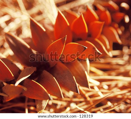 Spikey tree leaf