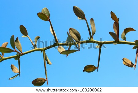 Spiky tree branch on blue background - stock photo