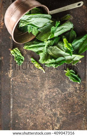 Spinach in the copper pt on the metal background vertical