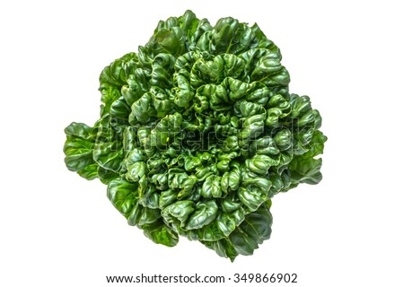 Spinach mustard(Chinese vegetables Brassica rapa var. rosularis) - stock photo