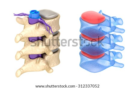 Spine x-ray view ,isolated on white - stock photo