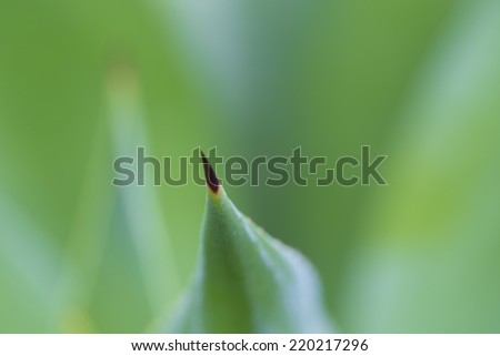 Spines of leaf