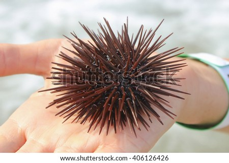 Spiny sea urchin on the open palm - stock photo