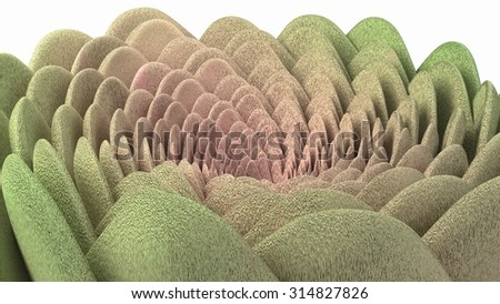 Spiral flower green and pink fluffy succulent - stock photo