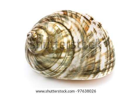 Spiral sea shell isolated on white