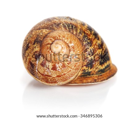 spiral shape sea shell isolated on white - stock photo