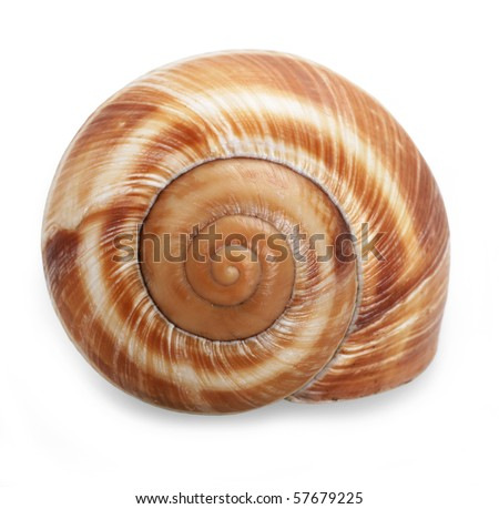 Spiral shell isolated on white - stock photo