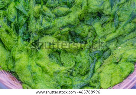 Spirogyra Stock Images, Royalty-Free Images & Vectors ...
