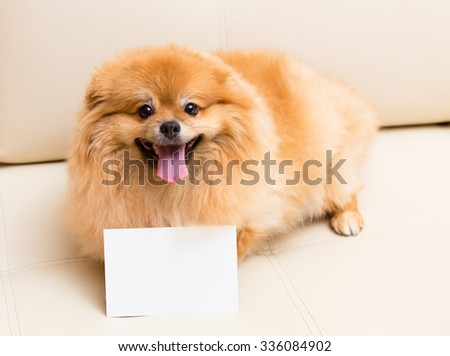 Spitz dog sits next to the card.
