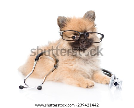 Spitz puppy lying with glasses and stethoscope on his neck. isolated on white background - stock photo