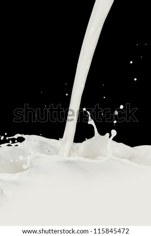 splashing milk isolated on black background - stock photo