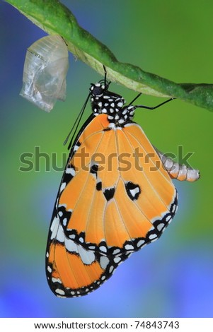 splendid and beautiful butterfly with flower - stock photo