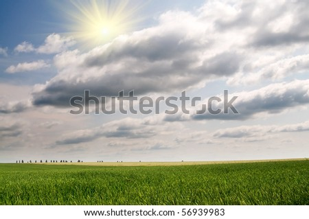 Splendid green field and the blue sky with sun. - stock photo