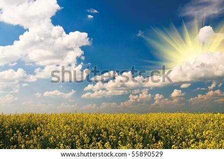 Splendid rapefield and fantastic cloudscape. - stock photo