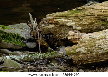 Splintered tree logs with a small frog sitting on the moss covered rock next to a clear shallow stream - stock photo