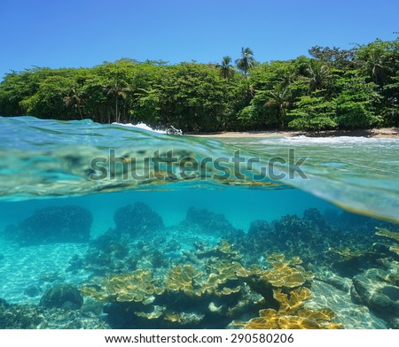 Split image half above and underwater of a tropical shore with lush vegetation and corals below the surface, Caribbean sea, Costa Rica - stock photo