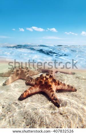 Split image of starfishes underwater, sunny day, blue sky - stock photo