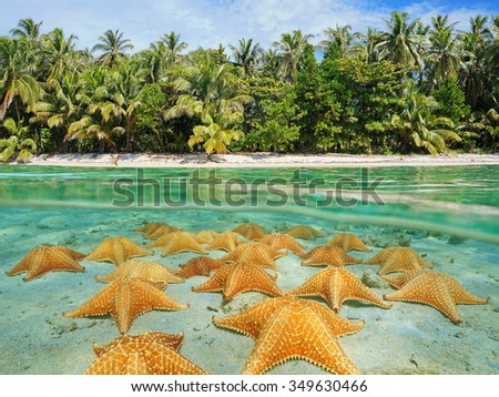Split image over and under sea surface near the shore of a tropical beach above waterline and a group of starfish underwater on sandy seabed, Caribbean, Panama - stock photo