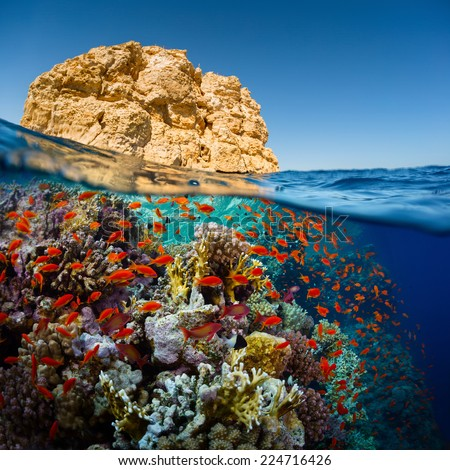 Split shot of the bright coral reef in Ras Muhammad National Park, Red Sea, Egypt - stock photo